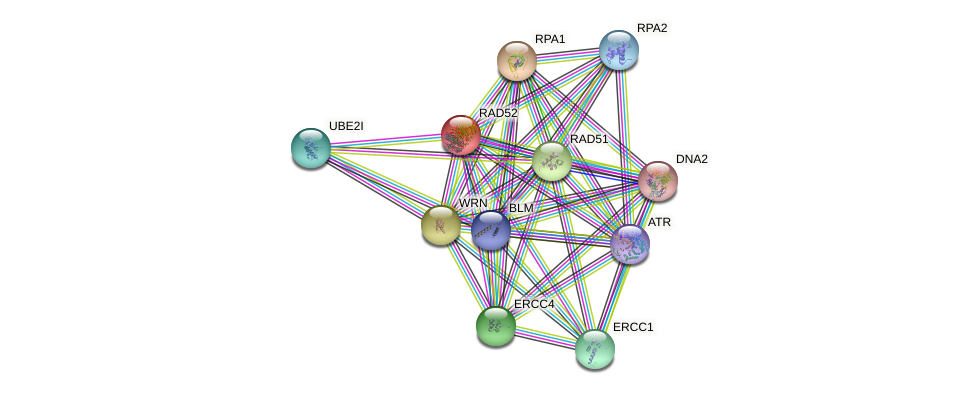 Protein-Protein network diagram for RAD52