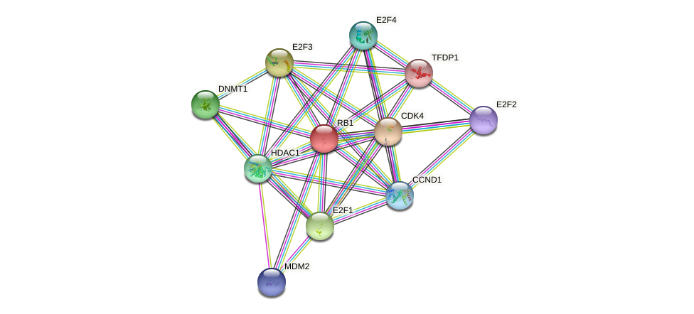 Protein-Protein network diagram for RB1