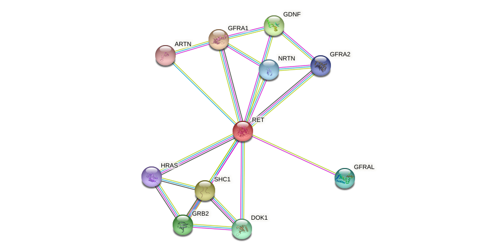 Protein-Protein network diagram for RET
