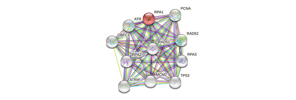 Protein-Protein network diagram for RPA1