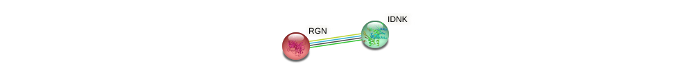 Protein-Protein network diagram for RGN