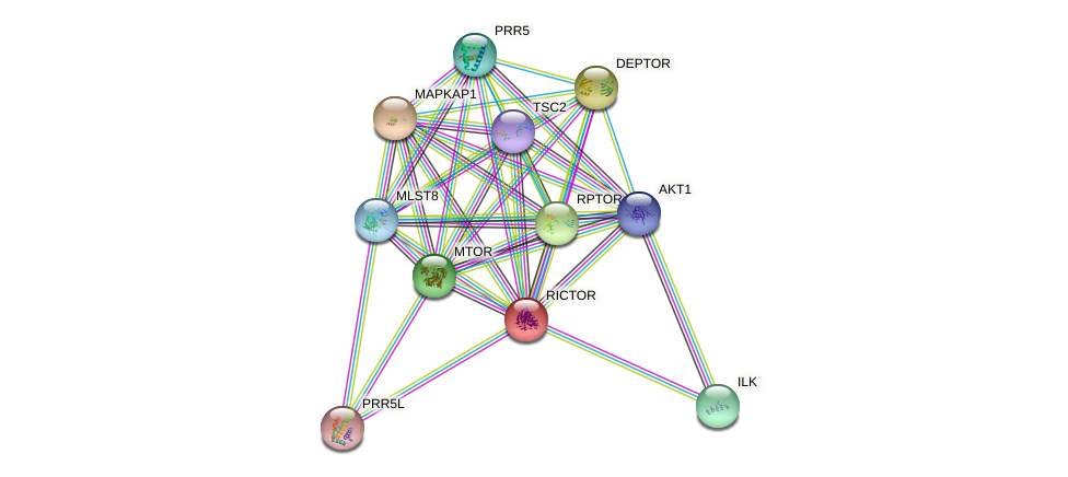 Protein-Protein network diagram for RICTOR