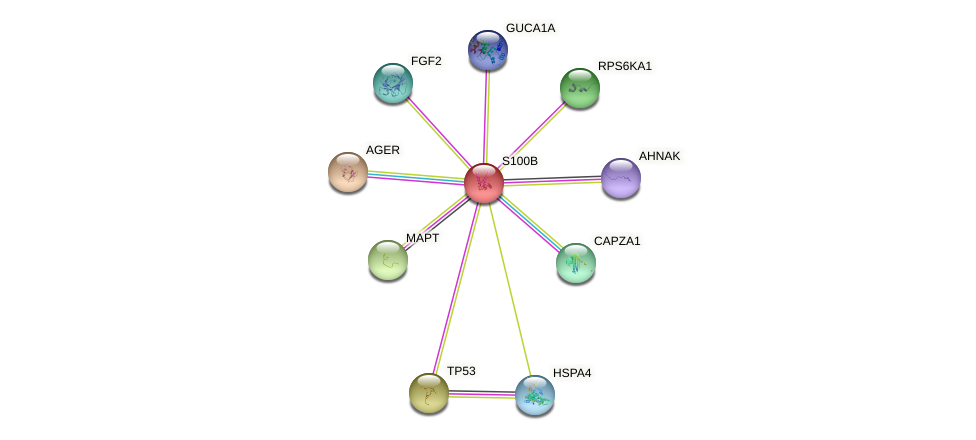 Protein-Protein network diagram for S100B