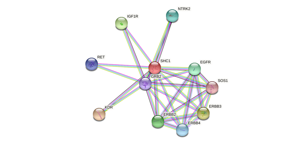 Protein-Protein network diagram for SHC1