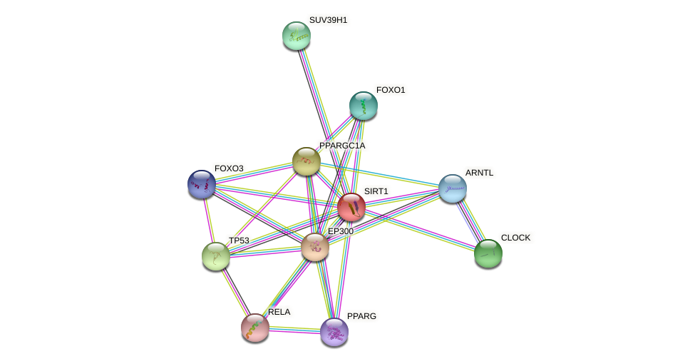 Protein-Protein network diagram for SIRT1
