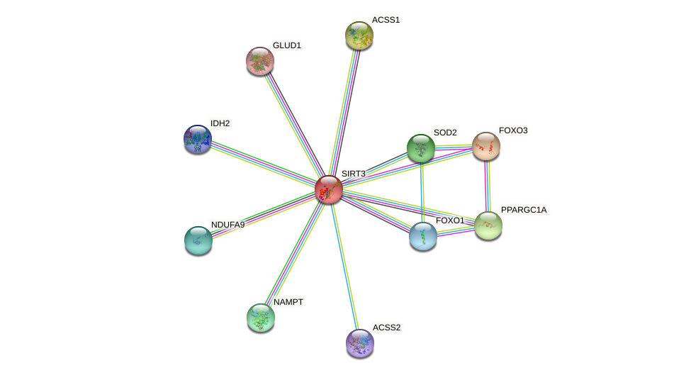 Protein-Protein network diagram for SIRT3