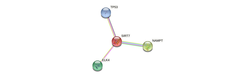 Protein-Protein network diagram for SIRT7