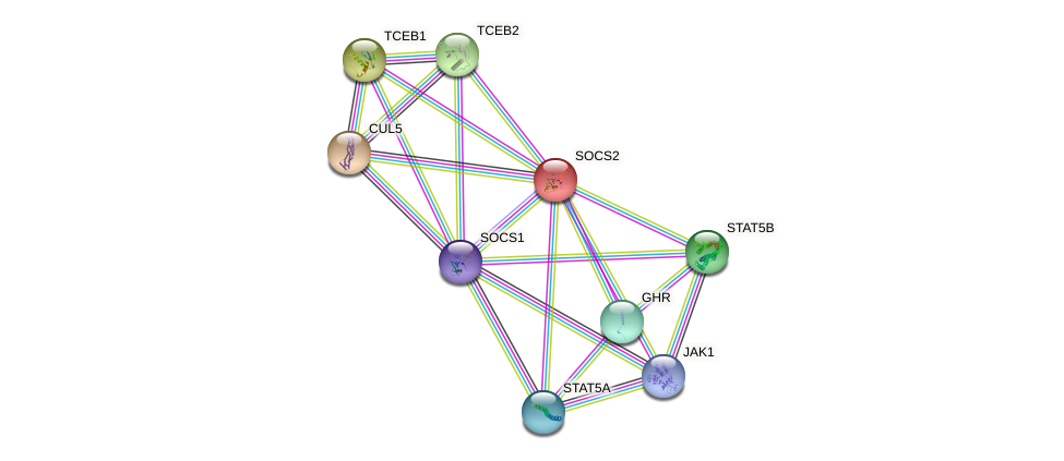 Protein-Protein network diagram for SOCS2