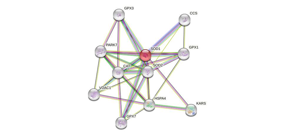 Protein-Protein network diagram for SOD1