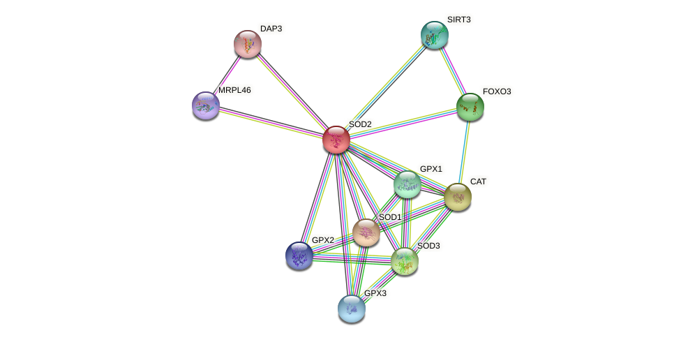 Protein-Protein network diagram for SOD2