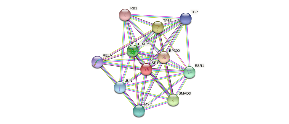 Protein-Protein network diagram for SP1