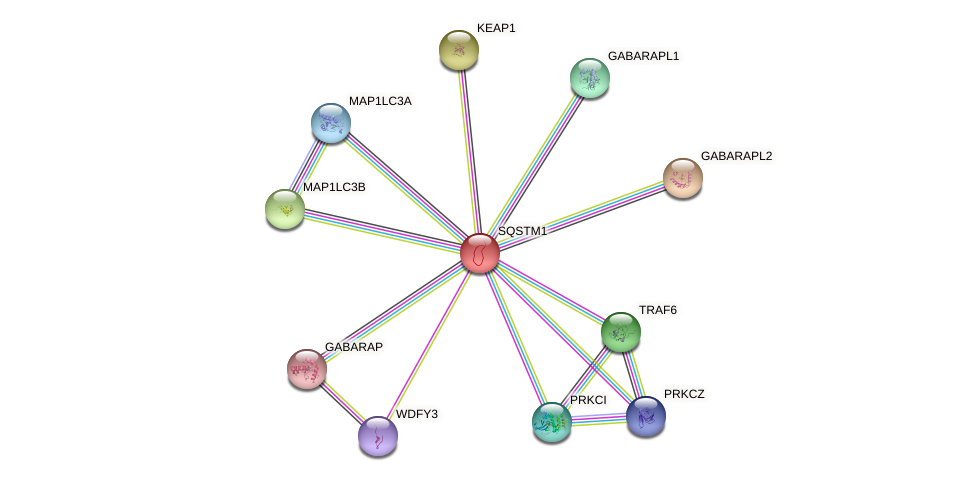 Protein-Protein network diagram for SQSTM1