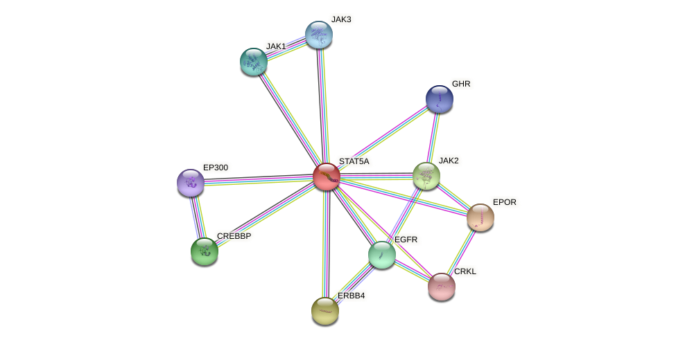 Protein-Protein network diagram for STAT5A