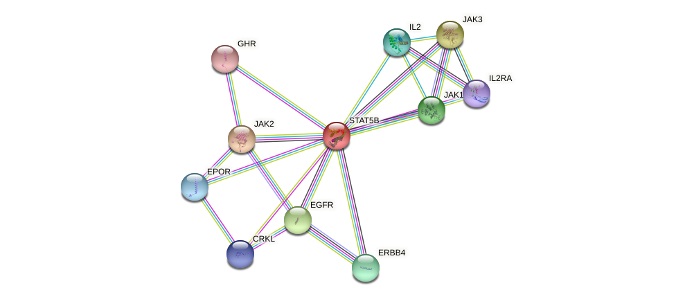 Protein-Protein network diagram for STAT5B