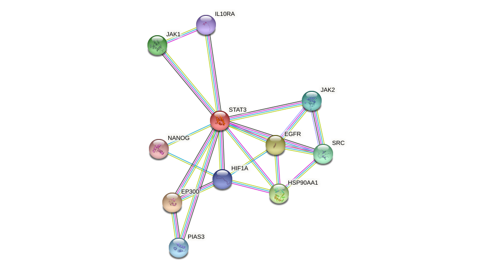 Protein-Protein network diagram for STAT3