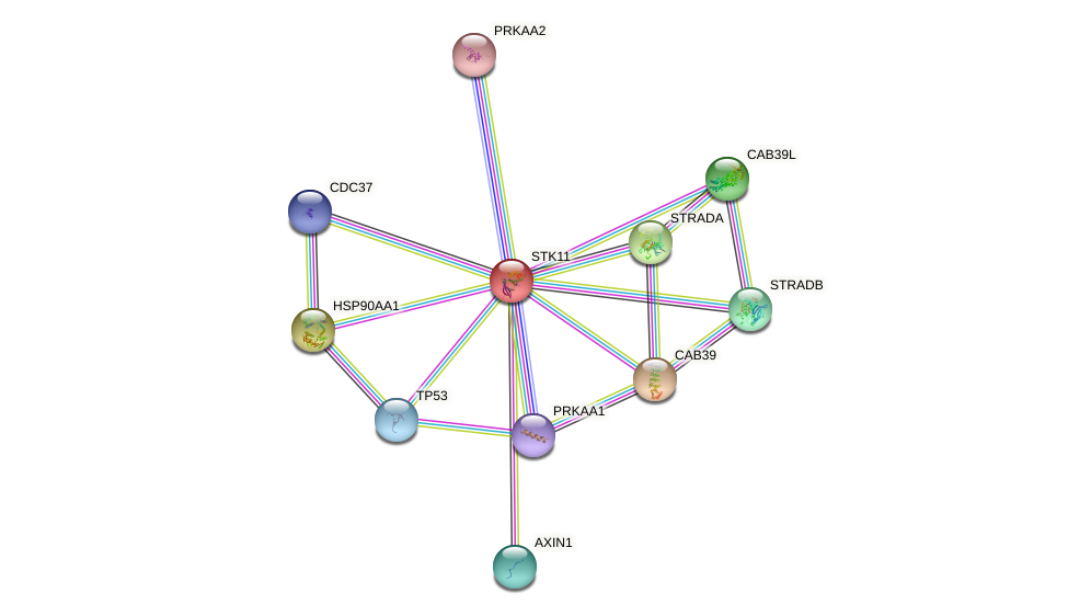 Protein-Protein network diagram for STK11