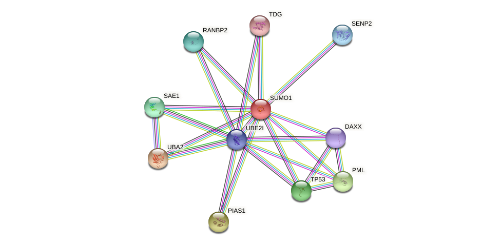 Protein-Protein network diagram for SUMO1