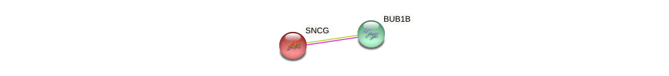 Protein-Protein network diagram for SNCG