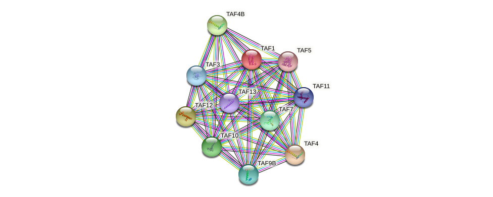 Protein-Protein network diagram for TAF1