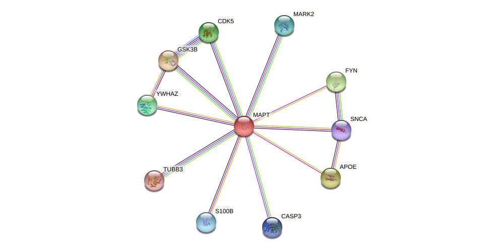 Protein-Protein network diagram for MAPT