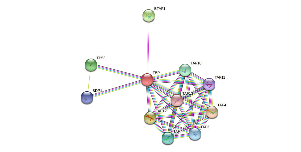 Protein-Protein network diagram for TBP