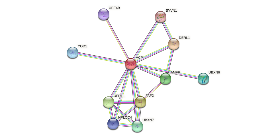 Protein-Protein network diagram for VCP