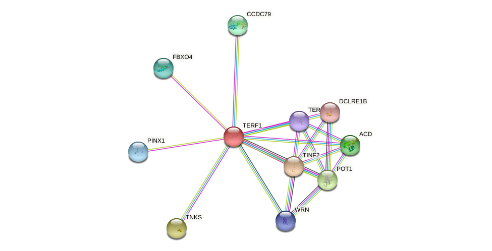 Protein-Protein network diagram for TERF1