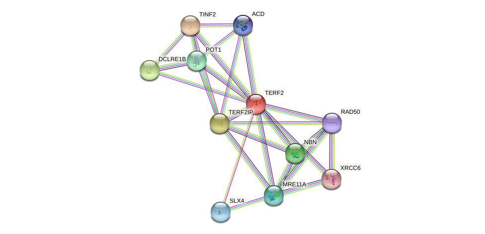 Protein-Protein network diagram for TERF2