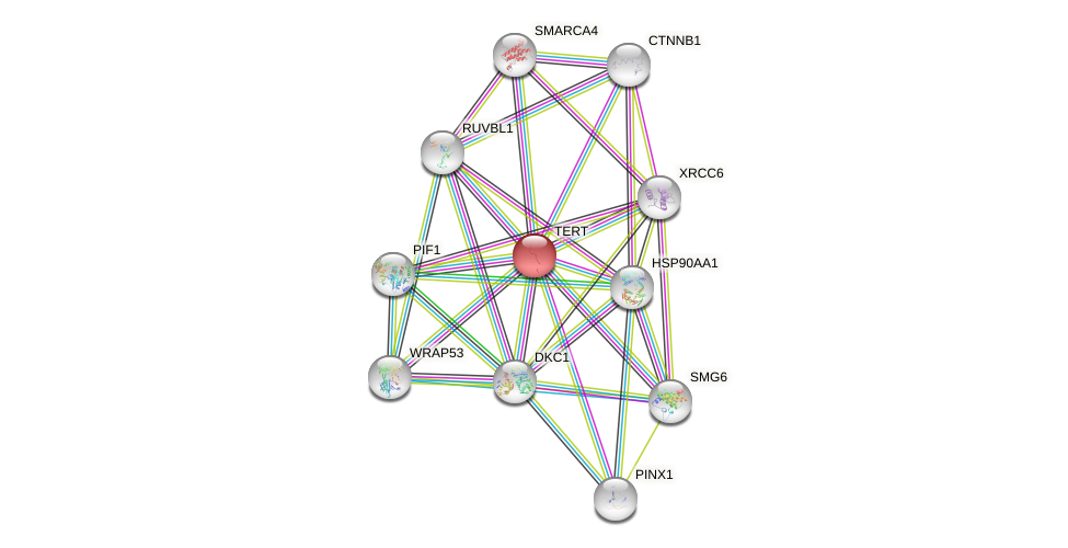 Protein-Protein network diagram for TERT