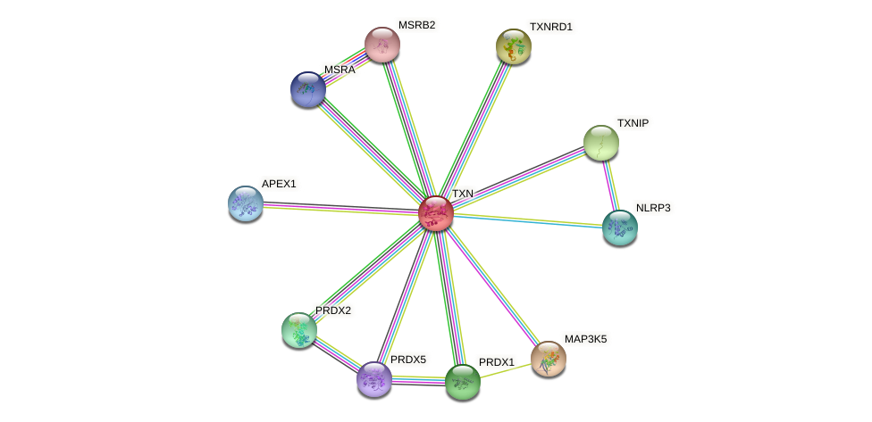 Protein-Protein network diagram for TXN