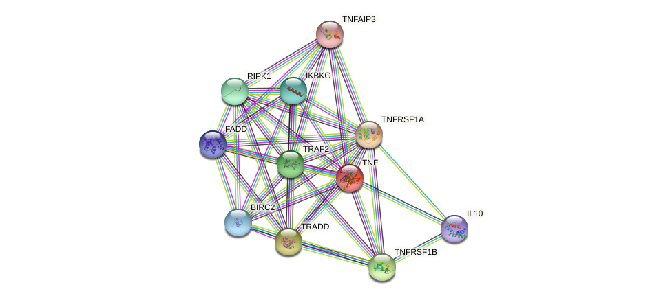 Protein-Protein network diagram for TNF