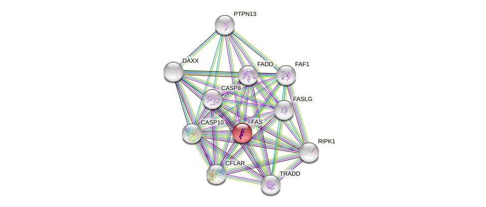 Protein-Protein network diagram for FAS