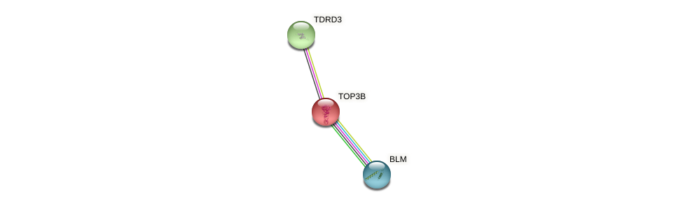 Protein-Protein network diagram for TOP3B