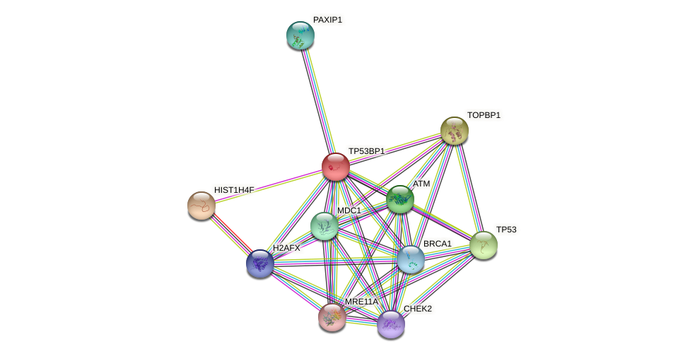 Protein-Protein network diagram for TP53BP1