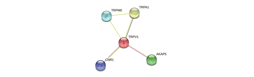 Protein-Protein network diagram for TRPV1
