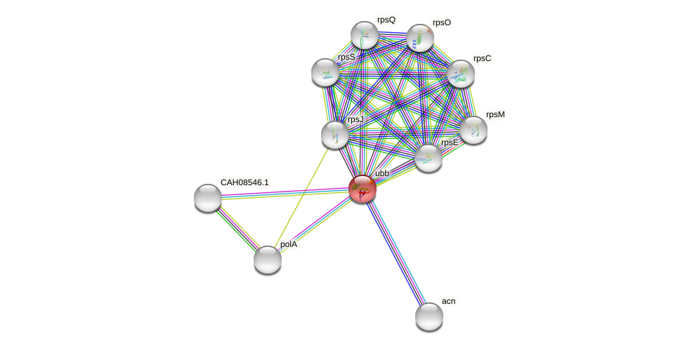 Protein-Protein network diagram for UBB