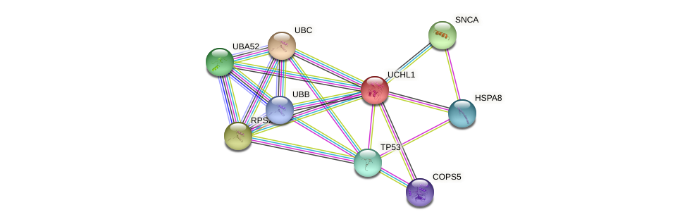 Protein-Protein network diagram for UCHL1
