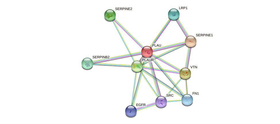 Protein-Protein network diagram for PLAU