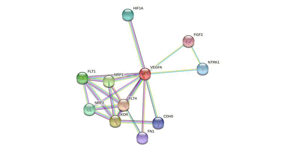 Protein-Protein network diagram for VEGFA
