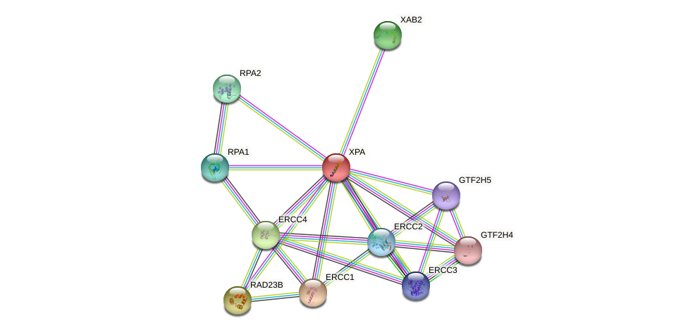 Protein-Protein network diagram for XPA