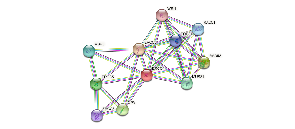 Protein-Protein network diagram for ERCC4