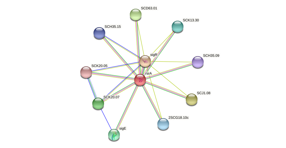 rsrA protein (Streptomyces coelicolor) - STRING interaction network