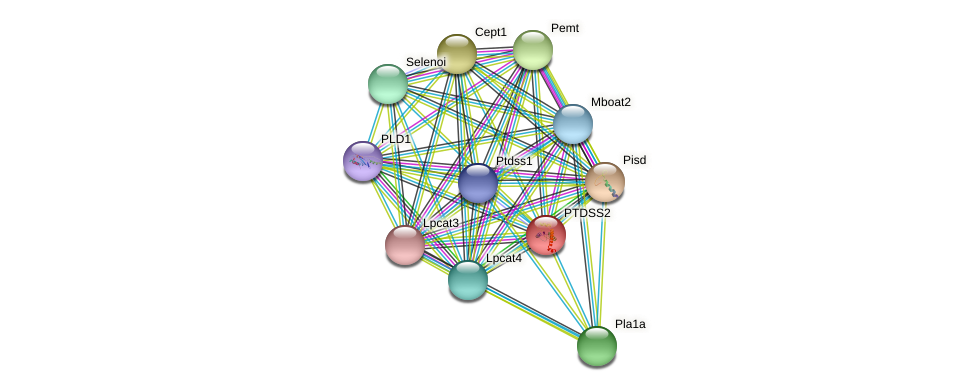PSSB protein (Cricetulus griseus) - STRING interaction network