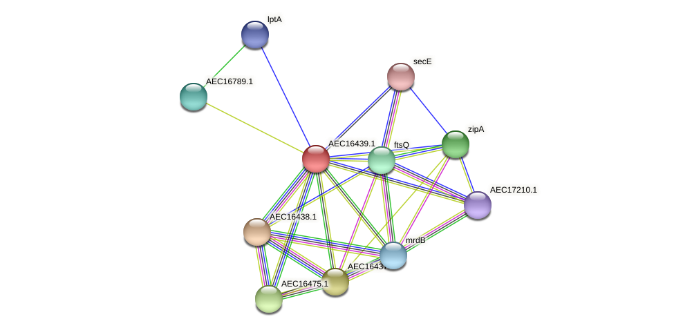 UMN179_00403 protein (Gallibacterium anatis) - STRING interaction network