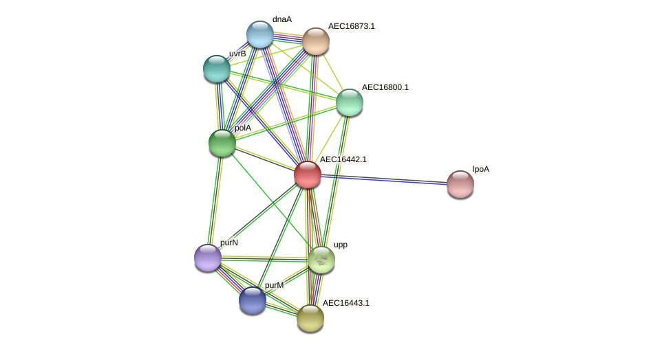 UMN179_00406 protein (Gallibacterium anatis) - STRING interaction network