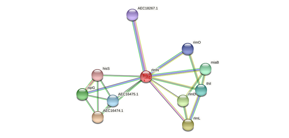 rlmN protein (Gallibacterium anatis) - STRING interaction network
