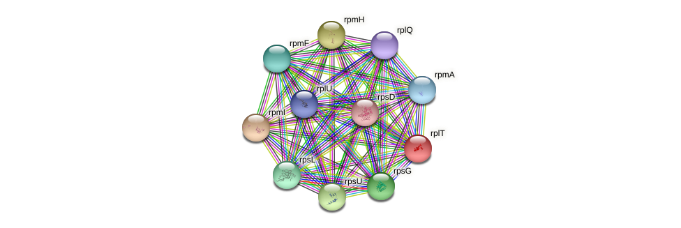 rplT protein (Gallibacterium anatis) - STRING interaction network