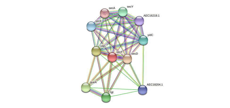 secF protein (Gallibacterium anatis) - STRING interaction network
