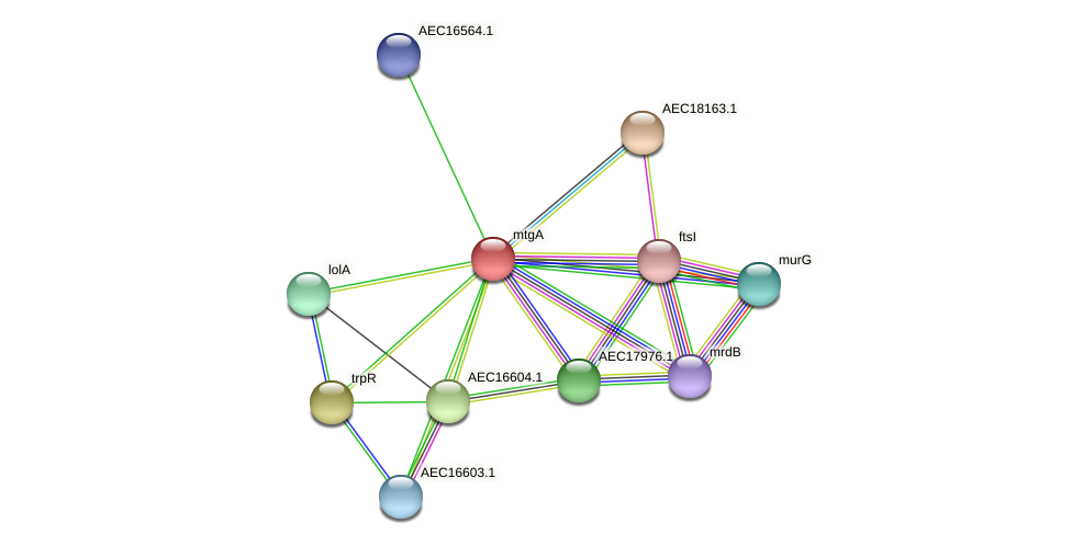 mtgA protein (Gallibacterium anatis) - STRING interaction network