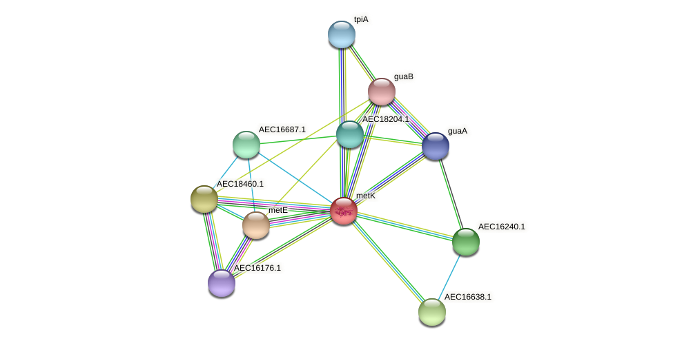 metK protein (Gallibacterium anatis) - STRING interaction network